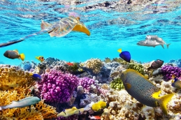 Corals And Tropical Fish.