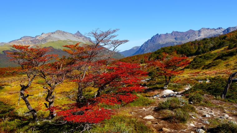 Wonderful landscape of Patagonia's Tierra del Fuego National Park in Autumn Argentina near Ushuaia March