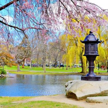 Lagoon at Boston Public Garden