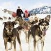 Alaska_Dog Sledding - 951383